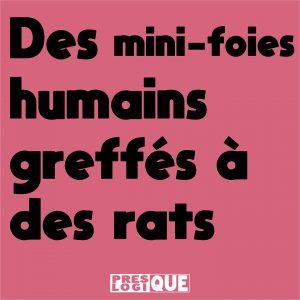 Des mini-foies humains ont été greffés à des rats